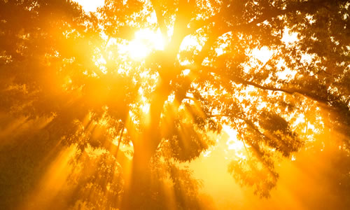 Golden sunbeams through tree